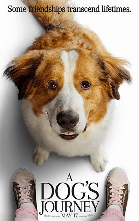 A Dogs Journey (2019) หมา เป้าหมาย และเด็กชายของผม 2 [ซับไทย]